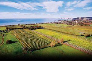 Eichardts-blog-winemaker-dinner-clearview-estate