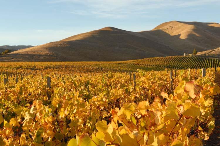 Eichardts-blog-winemaker-dinner-fromm-winery
