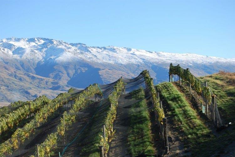 Eichardts-blog-winemaker-dinner-mishas-vineyard