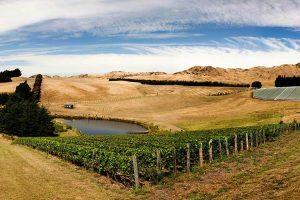 Eichardts-blog-winemaker-dinner-pyramid-valley