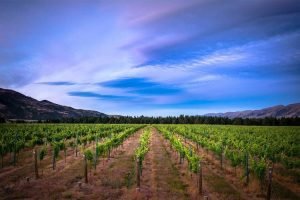 Eichardts-blog-winemaker-dinner-tarras-vineyard