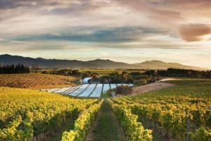 EPH-blog-image-dog-point-vineyard