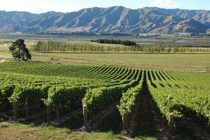 Eichardts-blog-winemaker-dinner-ostler-wines